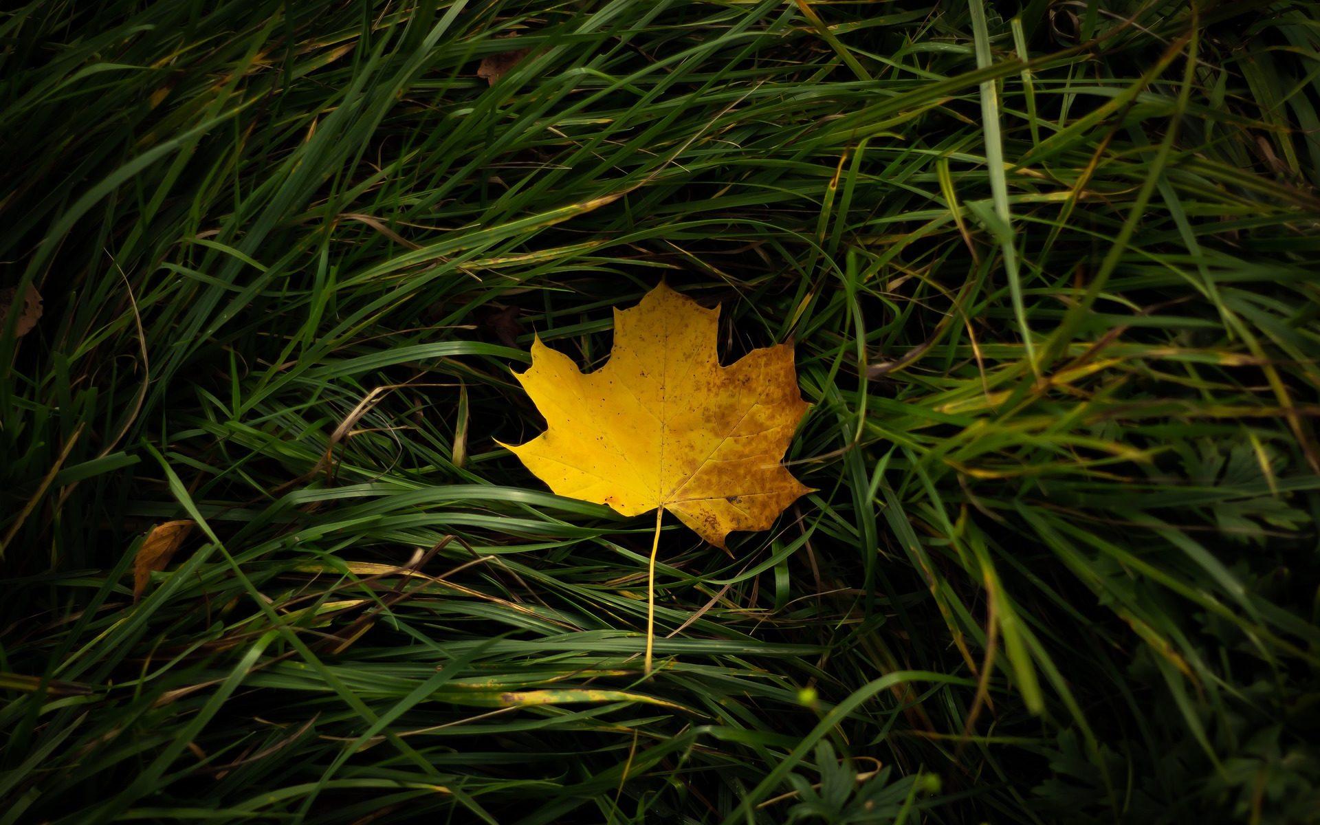Feuille d'automne sur herbe verte